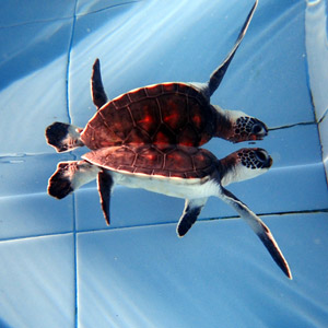 marine-turtle-conservation-programme-project-6